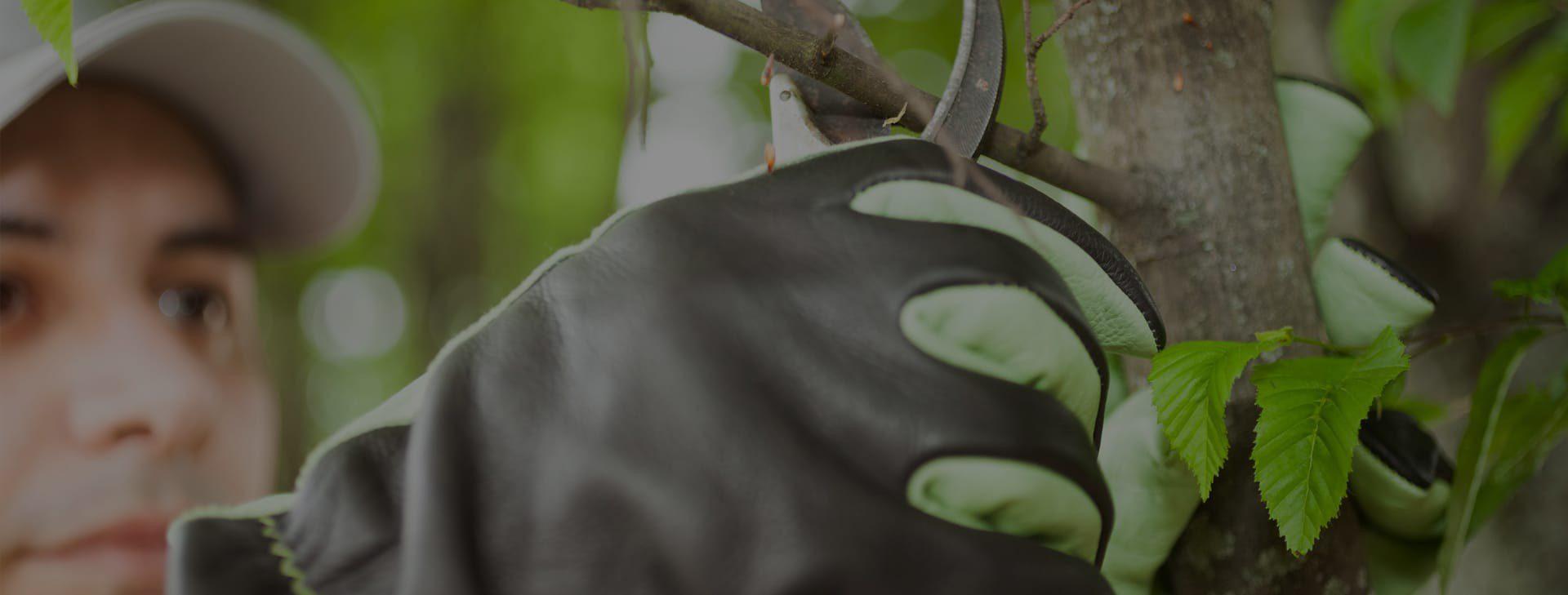 طراحی و اجرای فضای سبز، <br /> گل کاری و حفظ و نگهداری