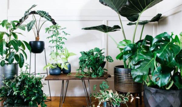 گل و گیاه آپارتمانی سیتروس