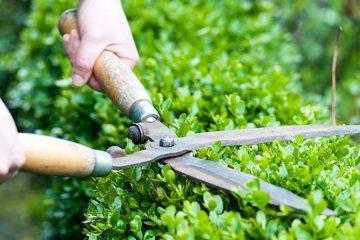 مراقبت از چمن و باغ